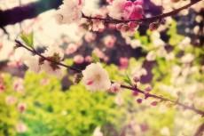 flower391-2