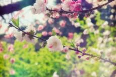 flower391
