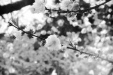 flower391-3