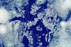 flower392-2