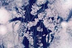 flower392