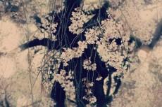 flower392-3