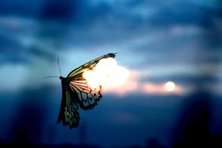 【高解像度】燃え尽きそうな蝶(3パターン)