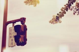 【高解像度】花と信号機のある風景(3パターン)