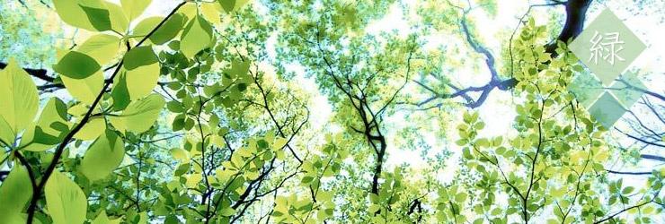 花のない草木の素材