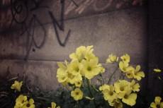 flower393