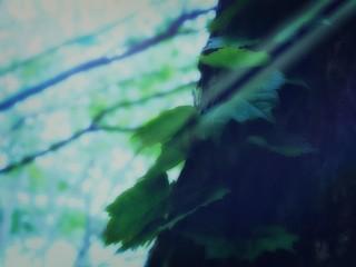 【高解像度】差し込む日差しと木の葉(3パターン)