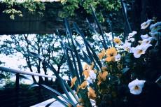 flower396-2
