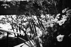 flower396-3