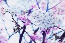 flower397-2