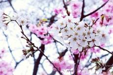 flower397