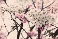 flower397-3
