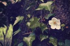 flower398-2