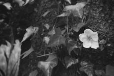 flower398-3