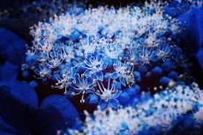 flower399