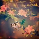 【高解像度】蝶と躑躅(ツツジ)(3パターン)