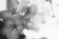flower403-3