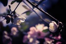 flower406-2