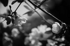 flower406-3