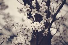 flower408-3