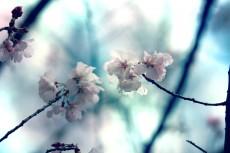 flower410-2