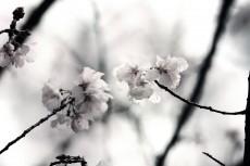 flower410-3