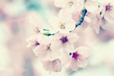 flower412-2