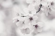 flower412-3