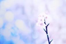 flower413-2