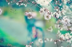 flower414