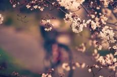 flower414-3