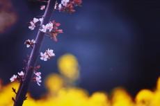 flower415-2