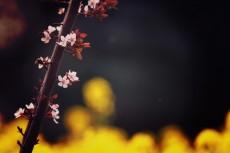 flower415