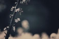 flower415-3