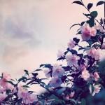 【高解像度】椿と空(3パターン)