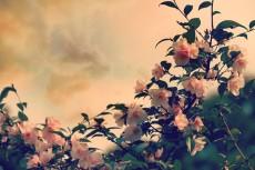 flower416-2