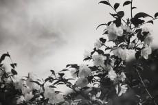 flower416-3