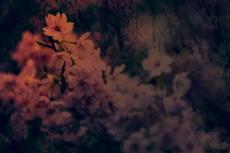 flower417-3