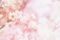 flower418