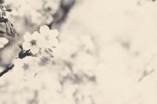 flower418-3