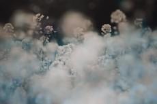 flower420-2