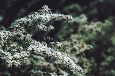 flower421