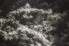 flower421-3