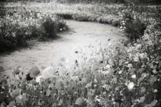 flower422-3