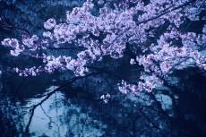 flower423-2