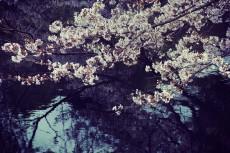 flower423