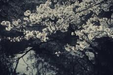 flower423-3