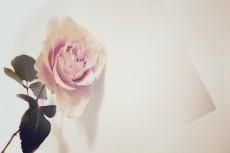 flower424-3