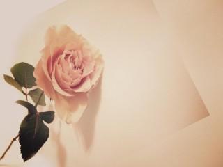 【高解像度】アンティークな雰囲気の薔薇(3パターン)