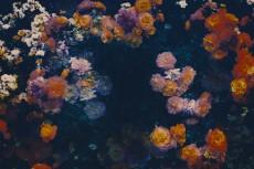 flower425-2